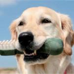 Tierhalterhundehaftpflichtversicherung