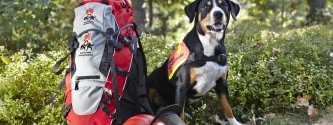 4250/ BRH Rucksack: DEUTSCHLAND, NIEDERSACHSEN, GOSLAR, 03. 10. 2011:   Deuter BRH Rucksack und Rettungshund-Azubi Kaija . - Bundesverband Rettungshunde/ Stefan Sobotta - Stichworte: